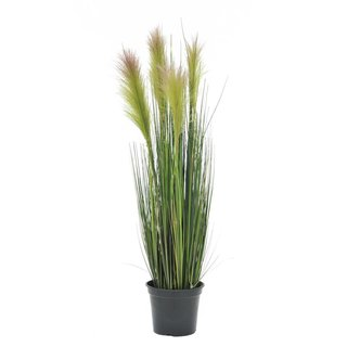 Europalms Feather grass, rosé, 90cm