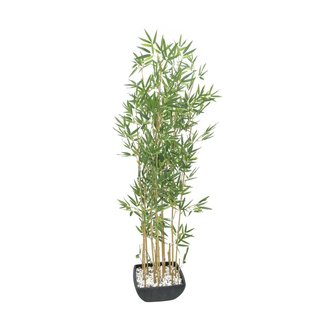 Europalms Bamboo in Bowl, 150cm
