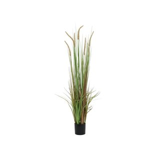 Europalms Fountain grass, 120cm