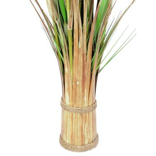 Europalms Fox grass, 150cm