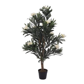 Europalms Oleander tree, white, 120 cm