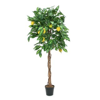 Europalms Lemon Tree, 180cm